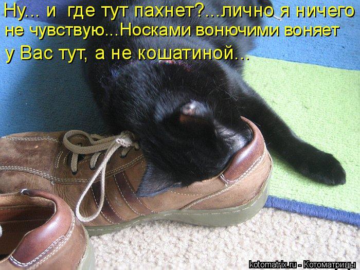 Котоматрица: у Вас тут, а не кошатиной…..    Ну….. и  где тут пахнет?…..лично я ничего    не чувствую..…Носками вонючими воняет