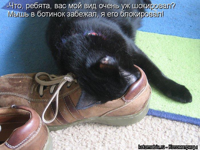 Котоматрица: -Что, ребята, вас мой вид очень уж шокировал? Мышь в ботинок забежал, я его блокировал!