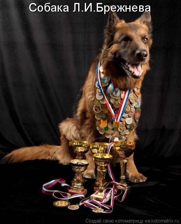 Котоматрица: Собака Л.И.Брежнева