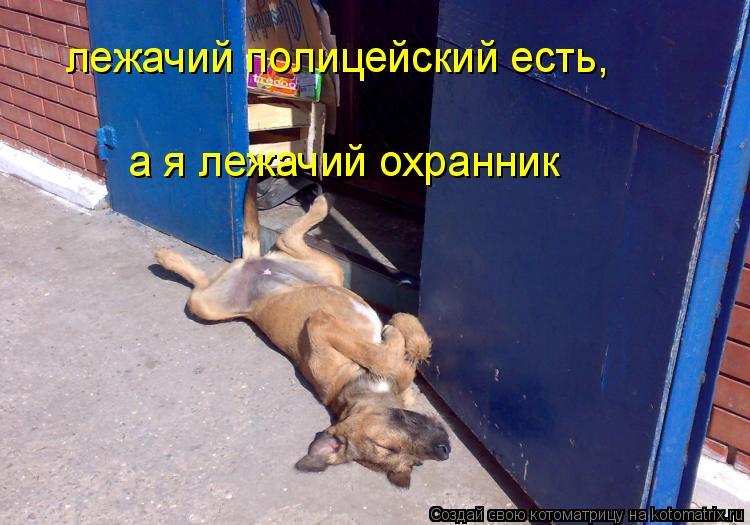 Котоматрица: лежачий полицейский есть,  а я лежачий охранник