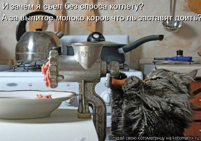 Котоматрица: И зачем я съел без спроса котлету?  А за выпитое молоко коров что ль заставят доить?