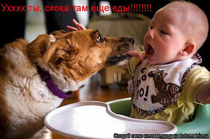 Котоматрица: Ухххх ты, скока там еще еды!!!!!!!!