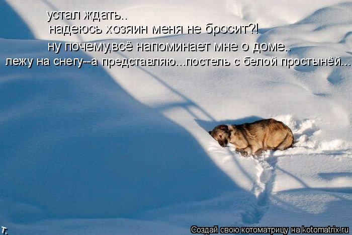 Котоматрица: устал ждать.. надеюсь хозяин меня не бросит?! ну почему,всё напоминает мне о доме.. лежу на снегу--а представляю...постель с белой простынёй...