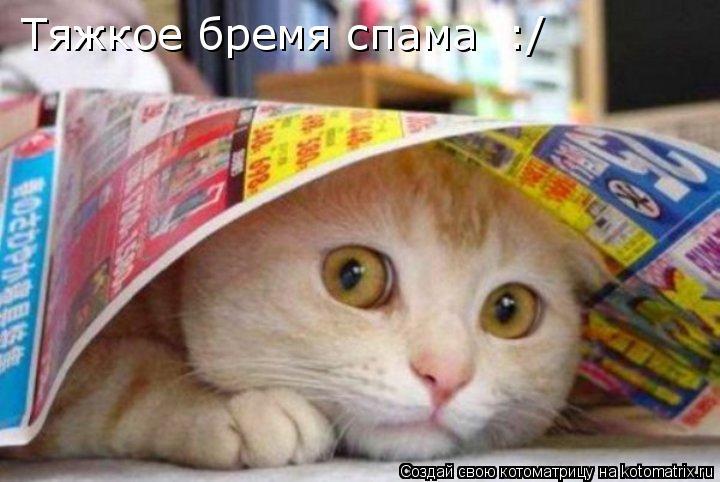 Котоматрица: Тяжкое бремя спама  :/