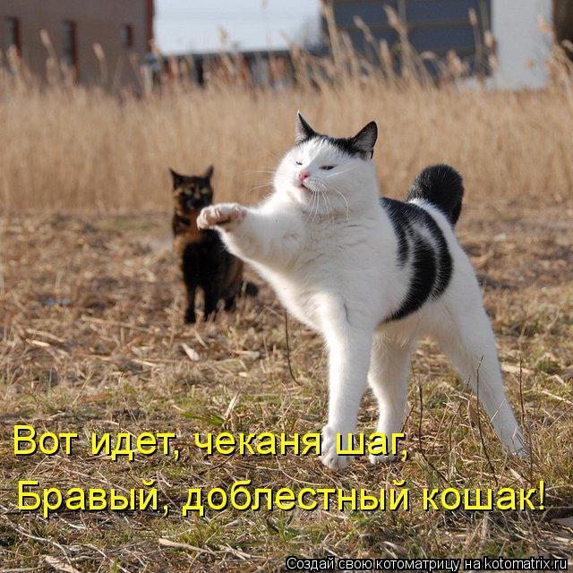 Котоматрица: Бравый, доблестный кошак! Вот идет, чеканя шаг,
