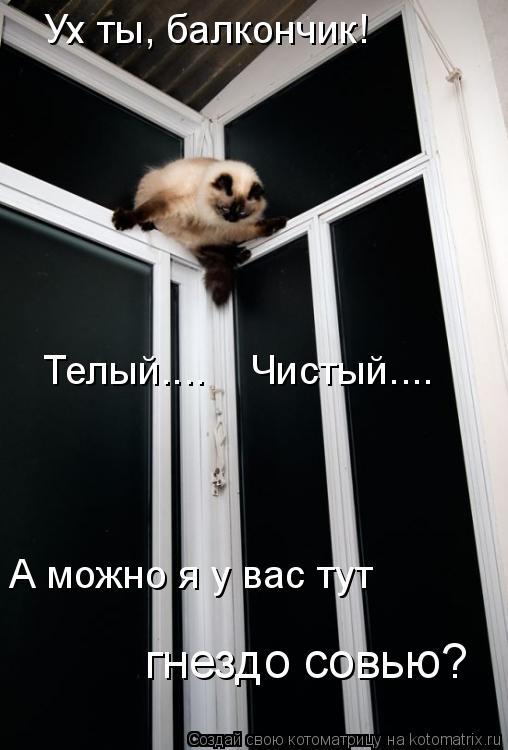 Котоматрица: Ух ты, балкончик! А можно я у вас тут  гнездо совью? Телый....    Чистый....
