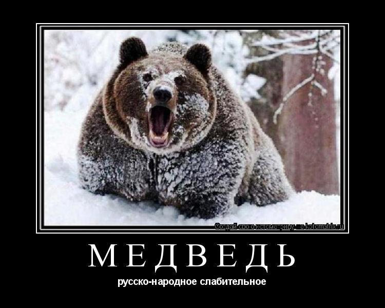 Котоматрица: медведь русско-народное слабительное
