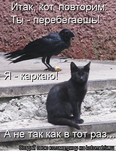 Котоматрица: Итак, кот, повторим: Ты - перебегаешь! Я - каркаю! А не так как в тот раз...
