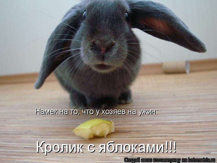 Котоматрица: Намек на то, что у хозяев на ужин: Кролик с яблоками!!!
