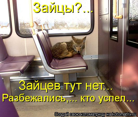 Котоматрица: Зайцы?... Зайцев тут нет….. Разбежались,….. кто успел…..