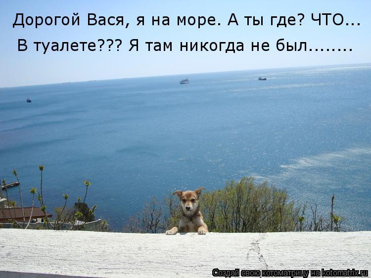 Котоматрица: Дорогой Вася, я на море. А ты где? ЧТО...   В туалете??? Я там никогда не был........