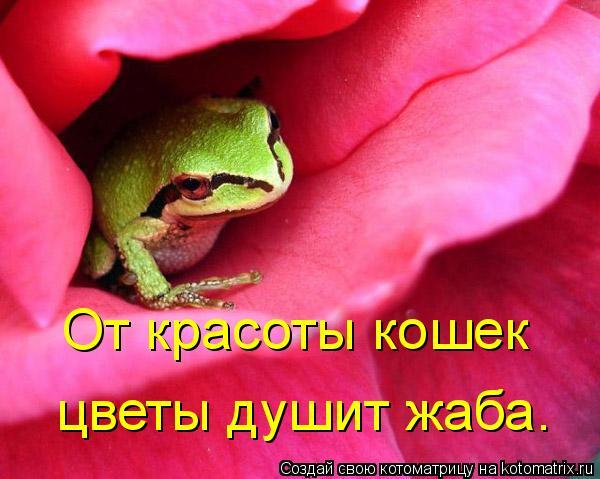 Котоматрица: От красоты кошек  цветы душит жаба.