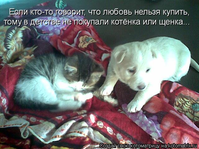 Котоматрица: Если кто-то говорит, что любовь нельзя купить, тому в детстве не покупали котёнка или щенка...