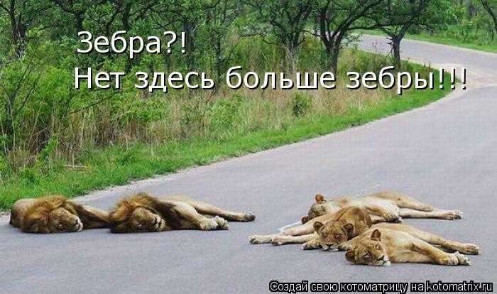 Котоматрица: Зебра?!  Нет здесь больше зебры!!!