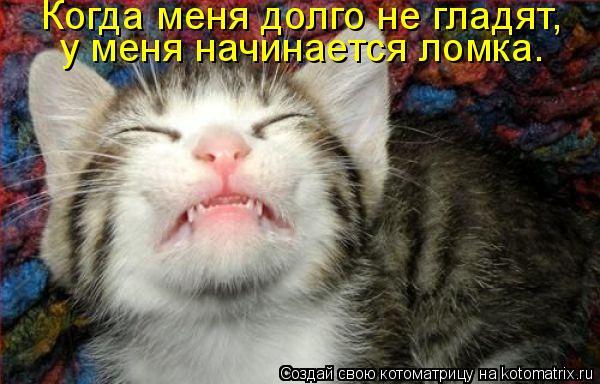 Котоматрица: Когда меня долго не гладят,  у меня начинается ломка.