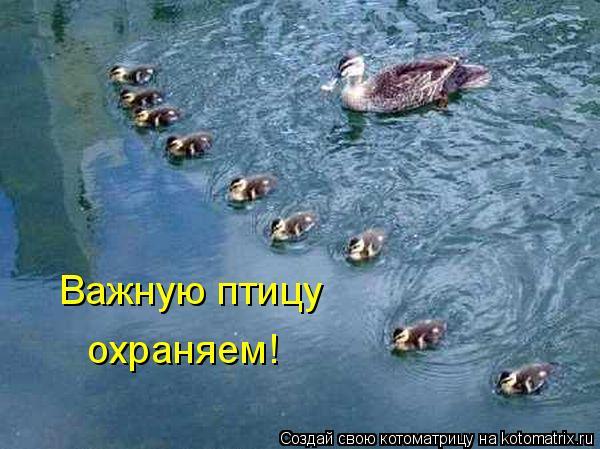 Котоматрица: Важную птицу  охраняем!