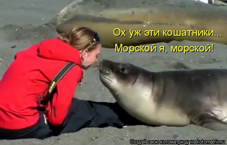 Котоматрица: Ох уж эти кошатники...  Морской я, морской!