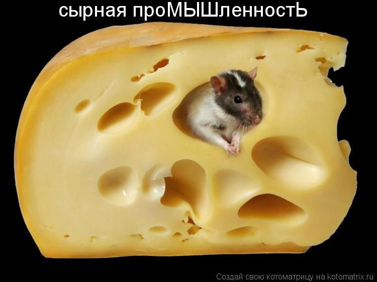 Котоматрица: сырная проМЫШленностЬ