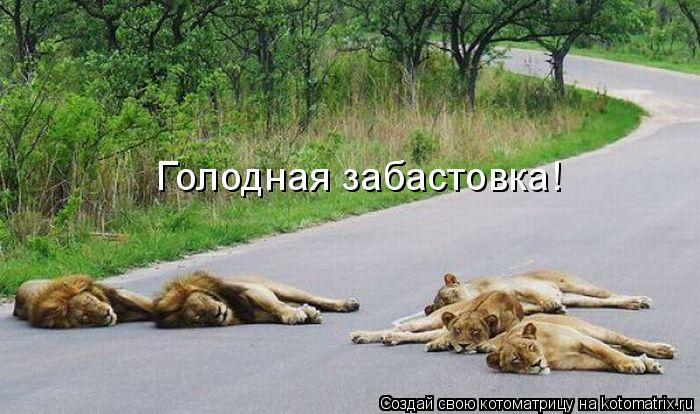 Котоматрица: Голодная забастовка!