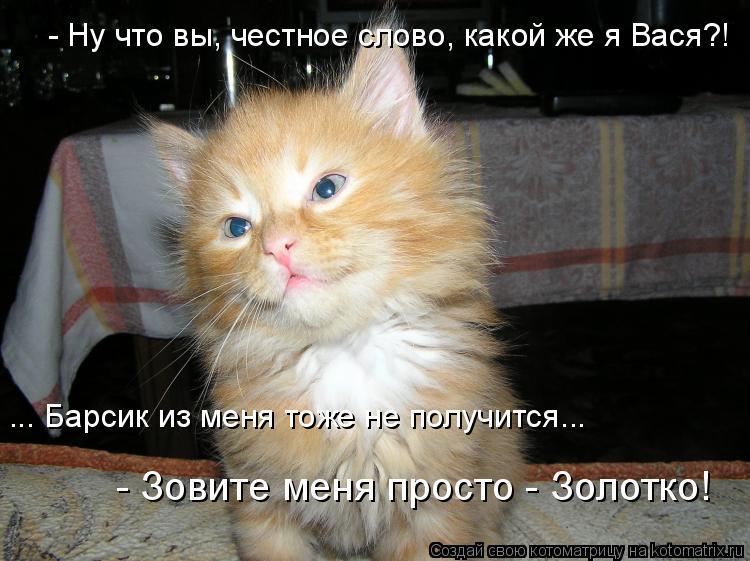 Котоматрица: - Ну что вы, честное слово, какой же я Вася?! ... Барсик из меня тоже не получится... - Зовите меня просто - Золотко!