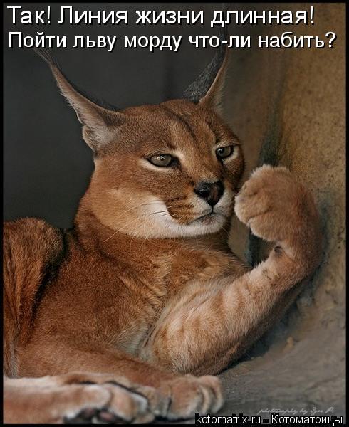 Так! Линия жизни длинная! Пойти льву морду что-ли набить?