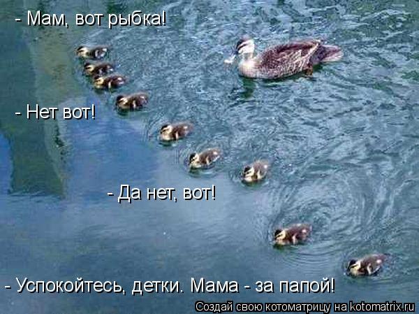 Котоматрица: - Мам, вот рыбка! - Нет вот! - Да нет, вот! - Успокойтесь, детки. Мама - за папой!