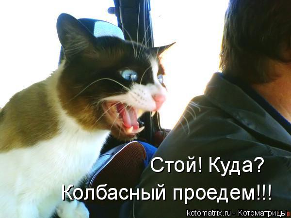 Котоматрица: Стой! Куда? Колбасный проедем!!!