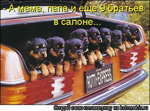 Котоматрица: - А мама, папа и еще 9 братьев в салоне...