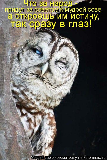 Котоматрица: Что за народ -  придут за советом к мудрой сове,  а откроешь им истину,  так сразу в глаз!