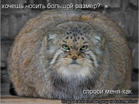 Котоматрица: хочешь носить большой размер? спроси меня-как.