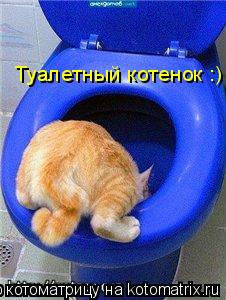 Котоматрица: Туалетный котенок :)