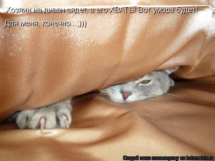 Котоматрица: Хозяин на диван сядет, а его ХВАТЬ! Вот умора будет! Для меня, конечно...;)))
