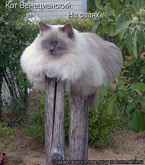 Котоматрица: Кот Венецианский. На сваях.