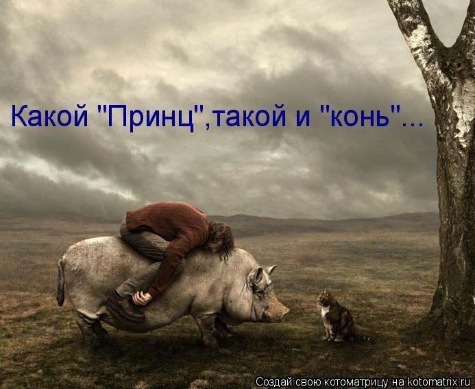 """Котоматрица: Какой """"Принц"""",такой и """"конь""""..."""