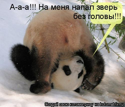 Котоматрица: А-а-а!!! На меня напал зверь  без головы!!!