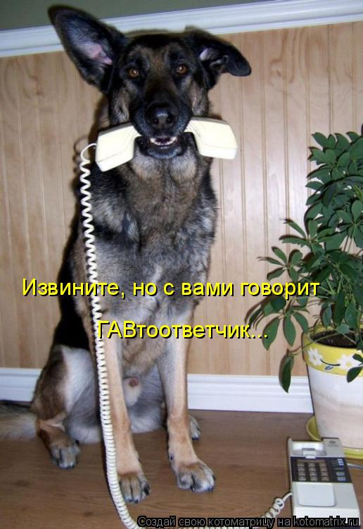 Котоматрица: Извините, но с вами говорит ГАВтоответчик...