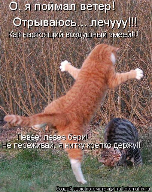 Котоматрица: О, я поймал ветер!  Отрываюсь... лечууу!!! Левее, левее бери! Не переживай, я нитку крепко держу!!! Как настоящий воздушный змеей!!!