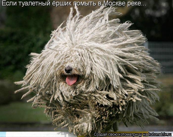 Котоматрица: Если туалетный ёршик помыть в Москве реке...