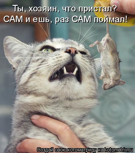 Котоматрица: САМ и ешь, раз САМ поймал! Ты, хозяин, что пристал?