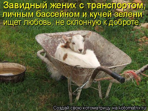 Котоматрица: Завидный жених с транспортом, личным бассейном и кучей зелени ищет любовь, не склонную к доброте.