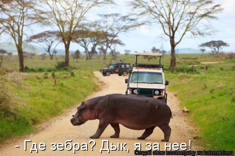Котоматрица: - Где зебра? Дык, я за нее!