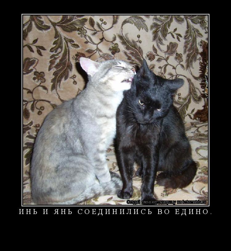 Котоматрица: Инь и Янь соединились во едино.