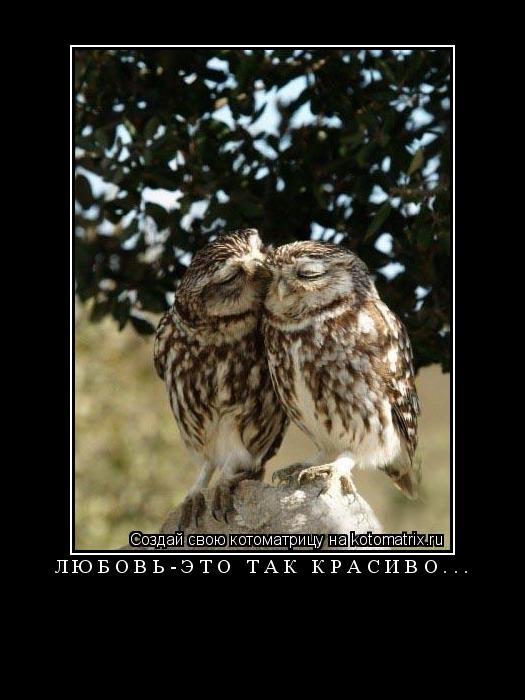 Котоматрица: любовь-это так красиво...