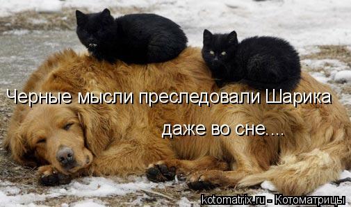 Котоматрица: Черные мысли преследовали Шарика  даже во сне…...