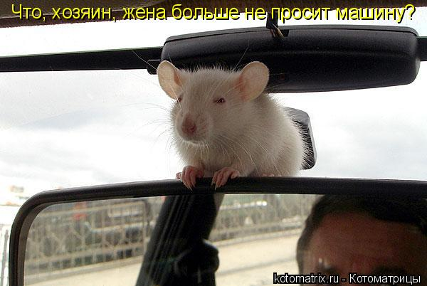 Котоматрица: Что, хозяин, жена больше не просит машину?