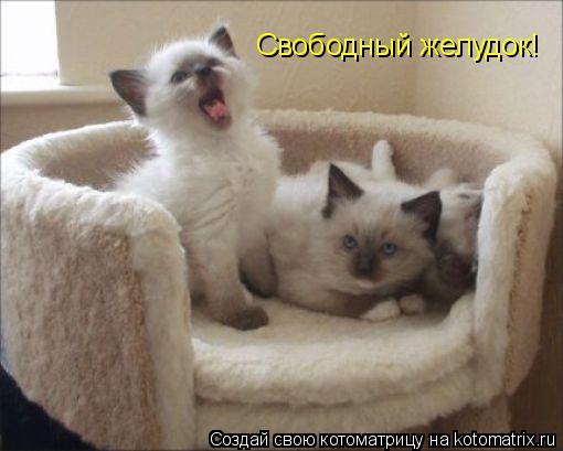 Котоматрица: Свободный желудок!
