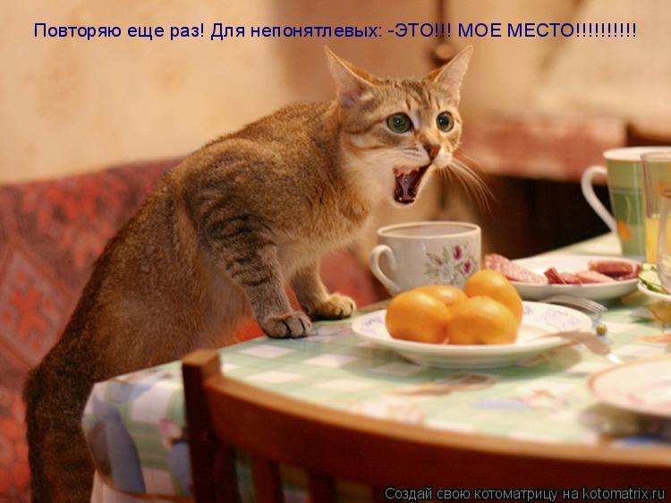 Котоматрица: Повторяю еще раз! Для непонятлевых: -ЭТО!!! МОЕ МЕСТО!!!!!!!!!! Повторяю еще раз! Для непонятлевых: -ЭТО!!! МОЕ МЕСТО!!!!!!!!!!