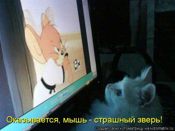 Котоматрица: Оказывается, мышь - страшный зверь!