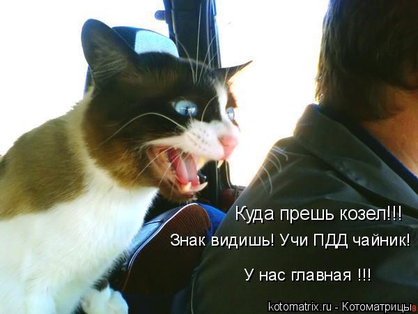 Котоматрица: Куда прешь козел!!! Знак видишь! Учи ПДД чайник! У нас главная !!!
