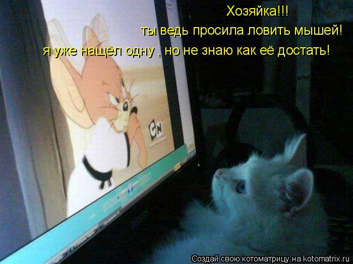 Котоматрица: Хозяйка!!! ты ведь просила ловить мышей! я уже нащёл одну , но не знаю как её достать!